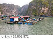 Купить «Floating village in Ha Long bay, Vietnam», фото № 33802872, снято 10 июля 2020 г. (c) easy Fotostock / Фотобанк Лори