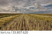 Купить «Stubble Field and Prarie Storm Canola Saskatchewan», фото № 33807620, снято 1 июня 2020 г. (c) age Fotostock / Фотобанк Лори