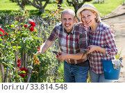 Купить «Elderly couple gardening in the backyard», фото № 33814548, снято 27 мая 2020 г. (c) Яков Филимонов / Фотобанк Лори