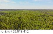 Купить «A huge thicket of coniferous forest», видеоролик № 33819412, снято 2 июня 2020 г. (c) Константин Шишкин / Фотобанк Лори