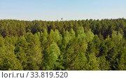 Купить «A huge thicket of coniferous green forest while summer time», видеоролик № 33819520, снято 2 июня 2020 г. (c) Константин Шишкин / Фотобанк Лори