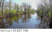 Купить «View of small dirty river between the different trees», видеоролик № 33827108, снято 1 июня 2020 г. (c) Константин Шишкин / Фотобанк Лори