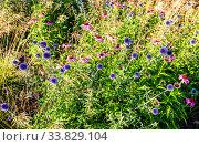 Купить «Nature organic background from decorative flowers», фото № 33829104, снято 8 июля 2019 г. (c) FotograFF / Фотобанк Лори