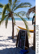 Купить «Magnificent view of a beach with a palm tree and a surf shop », фото № 33836208, снято 25 февраля 2020 г. (c) Wavebreak Media / Фотобанк Лори