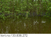 Young forest flooded during high water in spring. Стоковое фото, фотограф Евгений Харитонов / Фотобанк Лори