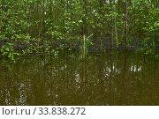 Купить «Young forest flooded during high water in spring», фото № 33838272, снято 15 мая 2020 г. (c) Евгений Харитонов / Фотобанк Лори