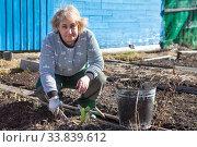 An elderly Caucasian woman pulls out the weeds in her garden. Стоковое фото, фотограф Кекяляйнен Андрей / Фотобанк Лори
