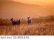 Купить «Cypress Hills Sunset Elkwater Alberta Horeshoe Canyon», фото № 33859616, снято 1 июня 2020 г. (c) age Fotostock / Фотобанк Лори