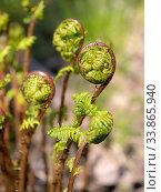 Купить «Fern in spring», фото № 33865940, снято 23 мая 2020 г. (c) Argument / Фотобанк Лори