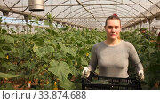 Купить «Woman farmer carries plastic box full of ripe cucumbers in greenhouse», видеоролик № 33874688, снято 29 апреля 2020 г. (c) Яков Филимонов / Фотобанк Лори