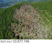 Купить «Краснодарский край, Туапсе, участок горных лесов, пострадавших от лесных пожаров», фото № 33877748, снято 27 мая 2020 г. (c) glokaya_kuzdra / Фотобанк Лори