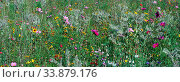 Planted wildflower meadow, Newham, London, England. Стоковое фото, фотограф Alex Bartel / age Fotostock / Фотобанк Лори