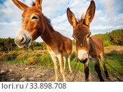 Купить «Wild donkey in Northern Cyprus», фото № 33898708, снято 2 июня 2020 г. (c) easy Fotostock / Фотобанк Лори