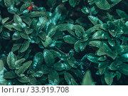 Купить «Зеленые экзотические растения. Идея цветового природного дизайна, вид сверху», фото № 33919708, снято 4 июня 2020 г. (c) Сергей Тиняков / Фотобанк Лори