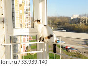 White fluffy cat in front of the window on the balcony. Стоковое фото, фотограф Кристина Сорокина / Фотобанк Лори