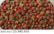 Купить «Red ripe juicy strawberry slow falls one by one on a tray with berries made of steel with holes. Berries background. Slow motion video. Top view. Full HD video, 240fps,1080p», видеоролик № 33940416, снято 3 июля 2020 г. (c) Ярослав Данильченко / Фотобанк Лори