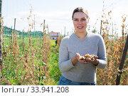 Young woman gardener while harvesting of beans in countryside. Стоковое фото, фотограф Яков Филимонов / Фотобанк Лори