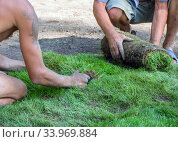 Процесс укладки рулонного газона рабочими. Стоковое фото, фотограф Вячеслав Палес / Фотобанк Лори