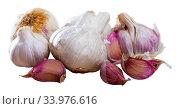 Купить «Whole raw garlic with separated cloves», фото № 33976616, снято 7 июля 2020 г. (c) Яков Филимонов / Фотобанк Лори
