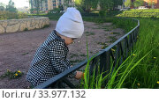Купить «Toddler child wearing shirt and hat touching green grass while walking on pathway in urban park, one year old kid», видеоролик № 33977132, снято 10 июня 2020 г. (c) Кекяляйнен Андрей / Фотобанк Лори