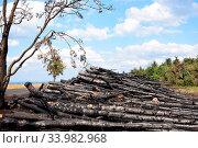 Купить «Arson on a forest edge. Verkohlte Stämme nach einer Brandstiftung am Waldrand.», фото № 33982968, снято 14 июля 2020 г. (c) easy Fotostock / Фотобанк Лори