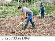 Gardener working soil with hoe at smallholding. Стоковое фото, фотограф Яков Филимонов / Фотобанк Лори