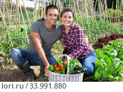 Happy couple proud of harvest of vegetables at garden. Стоковое фото, фотограф Яков Филимонов / Фотобанк Лори