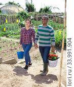 Happy couple carrying freshly harvested vegetables in home garden. Стоковое фото, фотограф Яков Филимонов / Фотобанк Лори