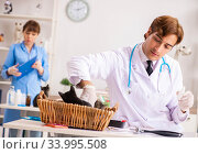 Купить «Doctor and assistant in vet clinic checking up kitten», фото № 33995508, снято 27 августа 2018 г. (c) Elnur / Фотобанк Лори