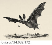 The golden-eared bat (Plecotus auritus) is a European bat. It has large ears with a characteristic fold. Old engraved animal illustration 19th century. Стоковое фото, фотограф Jerónimo Alba / age Fotostock / Фотобанк Лори