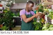 Купить «Owner of flower shop spraying potted flowers», фото № 34038164, снято 14 февраля 2019 г. (c) Яков Филимонов / Фотобанк Лори