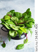 Green leaves of baby spinach, chard and arugula in a colander washed for making salad or smoothie. Vegan recipes, plant-based dishes. Green living. Стоковое фото, фотограф Nataliia Zhekova / Фотобанк Лори