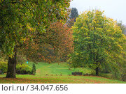 Beautiful Autumn forest with different trees. Walking trail in a mountain forest. Deciduous forest. A wood or forest in leaf. Стоковое фото, фотограф Nataliia Zhekova / Фотобанк Лори