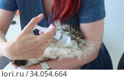 Купить «Giving water from the syringe to a big cat», видеоролик № 34054664, снято 11 июля 2020 г. (c) Константин Шишкин / Фотобанк Лори