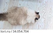 Купить «Big fluffy cat eating dry cat food from a bowl», видеоролик № 34054704, снято 12 июля 2020 г. (c) Константин Шишкин / Фотобанк Лори