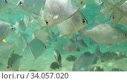 Подводная съемка на мелководье Индийского океана. Шри-Ланка. Стоковое видео, видеограф Виктор Карасев / Фотобанк Лори
