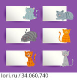 Cartoon Illustration of Funny Cats and Kittens with White Cards or Boards Greeting or Business Card Design Collection. Стоковое фото, фотограф Zoonar.com/Igor Zakowski / easy Fotostock / Фотобанк Лори