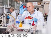Купить «Scientist checking agricultural products», фото № 34083460, снято 24 января 2019 г. (c) Яков Филимонов / Фотобанк Лори
