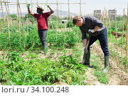 Купить «Professional horticulturist with garden shovel working at land», фото № 34100248, снято 18 мая 2020 г. (c) Яков Филимонов / Фотобанк Лори