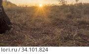 Купить «Meadow timelapse at the summer or autumn time. Rural field witch sun rays, trees and green grass. Motorised dolly slider at sunsset», видеоролик № 34101824, снято 20 марта 2020 г. (c) Александр Маркин / Фотобанк Лори