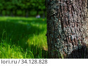 Купить «Spring meadow with big tree with fresh green leaves. Selective focus macro shot with shallow DOF.», фото № 34128828, снято 4 июля 2020 г. (c) age Fotostock / Фотобанк Лори