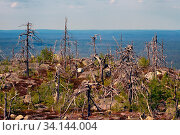 Купить «Dark mountain forest near Arctic circle. Harsh conditions of growth among the stones that are in chaos piled glacier. curves mystical pine on rocks. here the witches gather, place of power», фото № 34144004, снято 6 июля 2020 г. (c) easy Fotostock / Фотобанк Лори