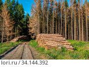 Купить «Piled logs of harvested wood timber next to forest. Czech Republic Bark beetle attack calamity deforestation, European landscape», фото № 34144392, снято 14 июля 2020 г. (c) easy Fotostock / Фотобанк Лори