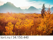 Bright colors of the Fall season in Grand Teton National Park, Wyoming, USA. Стоковое фото, фотограф Zoonar.com/Galyna Andrushko / easy Fotostock / Фотобанк Лори