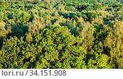 Natural background - panoramic view of forest illuminated by sunset sun in summer evening. Стоковое фото, фотограф Zoonar.com/Valery Voennyy / easy Fotostock / Фотобанк Лори