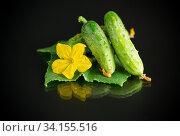 Купить «fresh natural green cucumbers on a black», фото № 34155516, снято 5 июля 2020 г. (c) Peredniankina / Фотобанк Лори