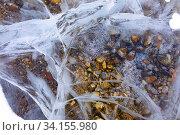 Купить «Pebbles under the crystal clear river ice», фото № 34155980, снято 25 января 2020 г. (c) Владимир Мельников / Фотобанк Лори