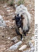Mountain goat in the forest. Стоковое фото, фотограф Татьяна Ляпи / Фотобанк Лори