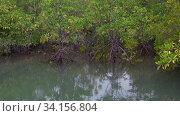 Купить «Корни мангровых деревьев. Окрестности города Хуа Хин, Таиланд», видеоролик № 34156804, снято 11 декабря 2018 г. (c) Виктор Карасев / Фотобанк Лори