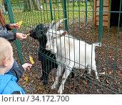 Люди кормят козлят осенними листьями. Мини-зоопарк. Стоковое фото, фотограф Ирина Борсученко / Фотобанк Лори